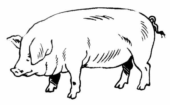 dessin-porc-1.jpeg