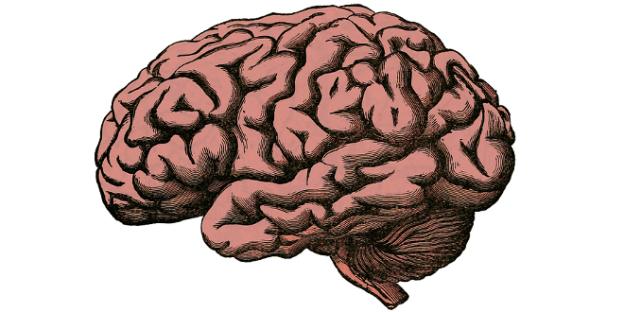 cerveau-660x330.png